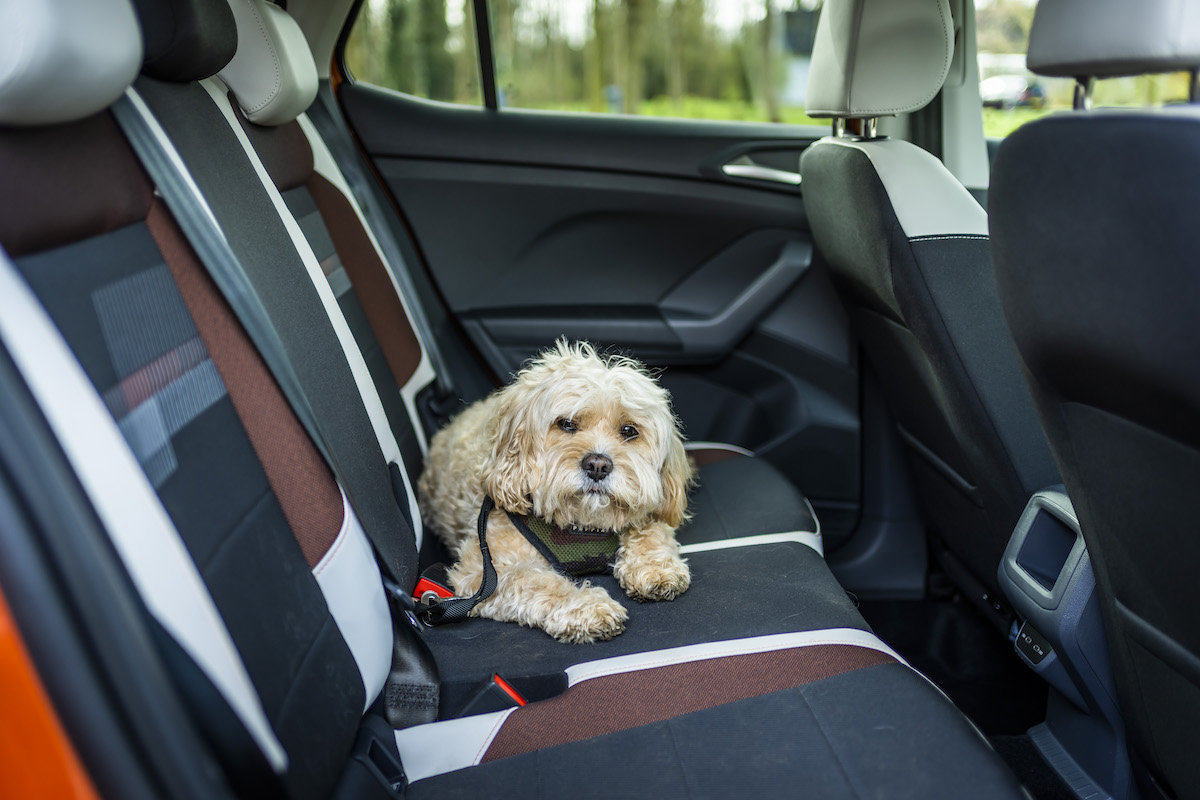 How to Travel with your Dog in the Car - CarGurus.co.uk
