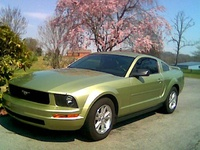 2006 Ford Mustang Picture Gallery