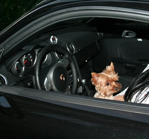 Picture of 2006 Porsche Cayman S, interior, gallery_worthy