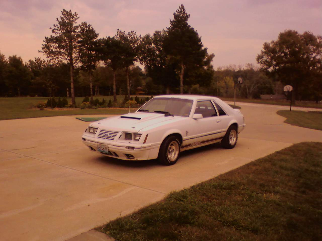 Picture of 1984 ford mustang gt350 exterior - Filename 1984_ford_mustang_gt350 Pic 25435 Jpeg