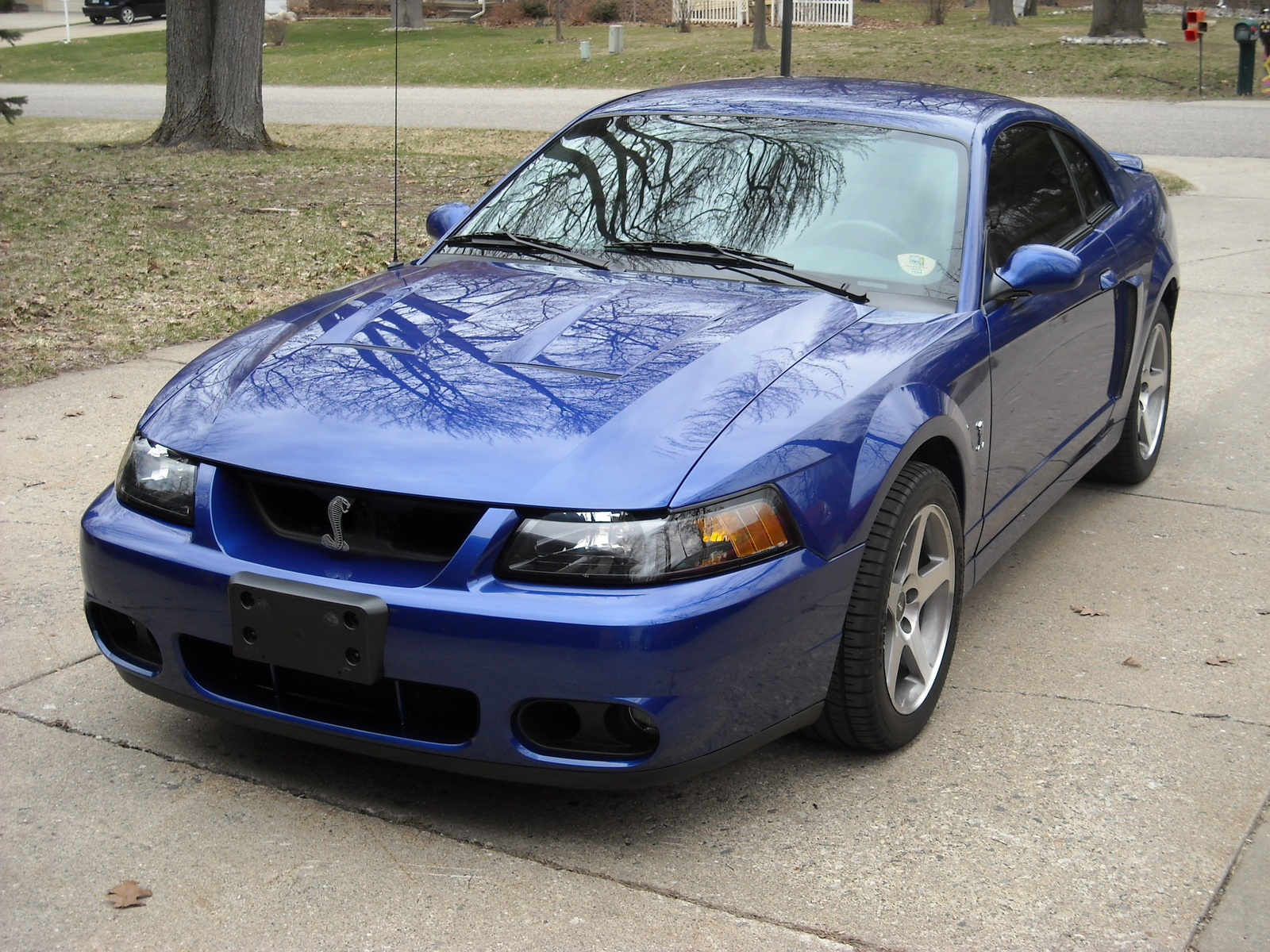 2003 Ford Mustang SVT Cobra - Exterior Pictures - CarGurus
