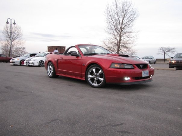 2001 Ford Mustang Gt Convertible. 2001 Ford Mustang GT Premium