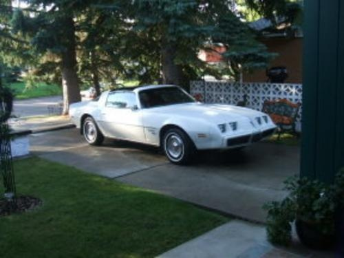 Picture of 1981 Pontiac Firebird, exterior, gallery_worthy
