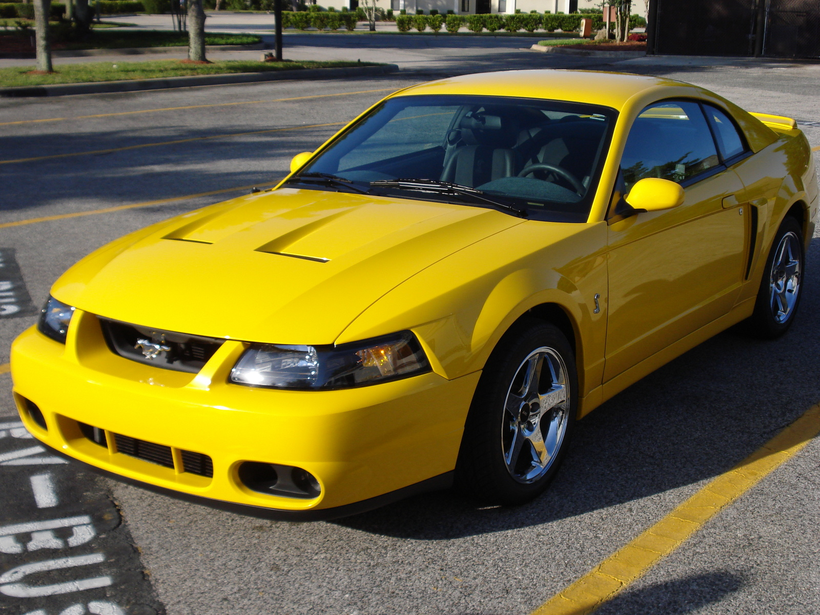 2000 ford mustang svt cobra pictures cargurus. Black Bedroom Furniture Sets. Home Design Ideas