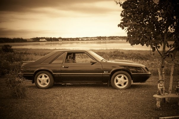 Picture of 1987 Ford Mustang