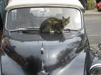 1958 Morris Minor, JAZZY LOVES HER WARM HEART   (BONNET), exterior