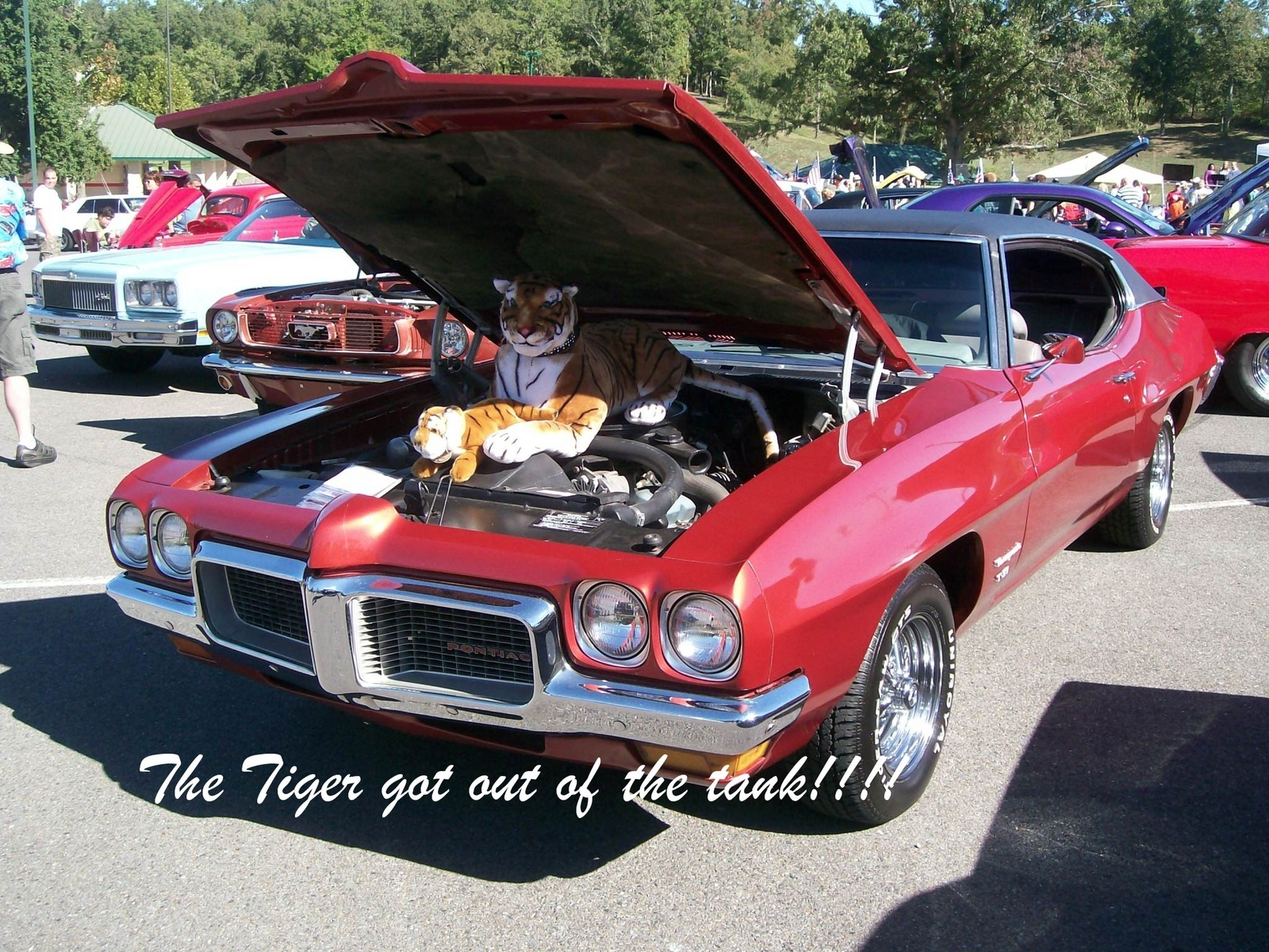 Pontiac Tempest Questions - How many owners of true Tempest