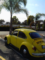 1972 Volkswagen Super Beetle, Parked under that same shady Palm tree., exterior