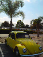 1972 Volkswagen Super Beetle, Parked under a shady Palm tree., exterior