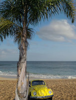 1972 Volkswagen Beetle, Little Buggalou under Palm at the beach., exterior