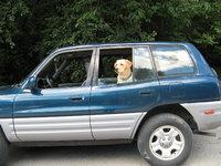 1999 Toyota RAV4 4 Door, my ride and my pup, exterior, gallery_worthy