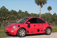 ladybug591