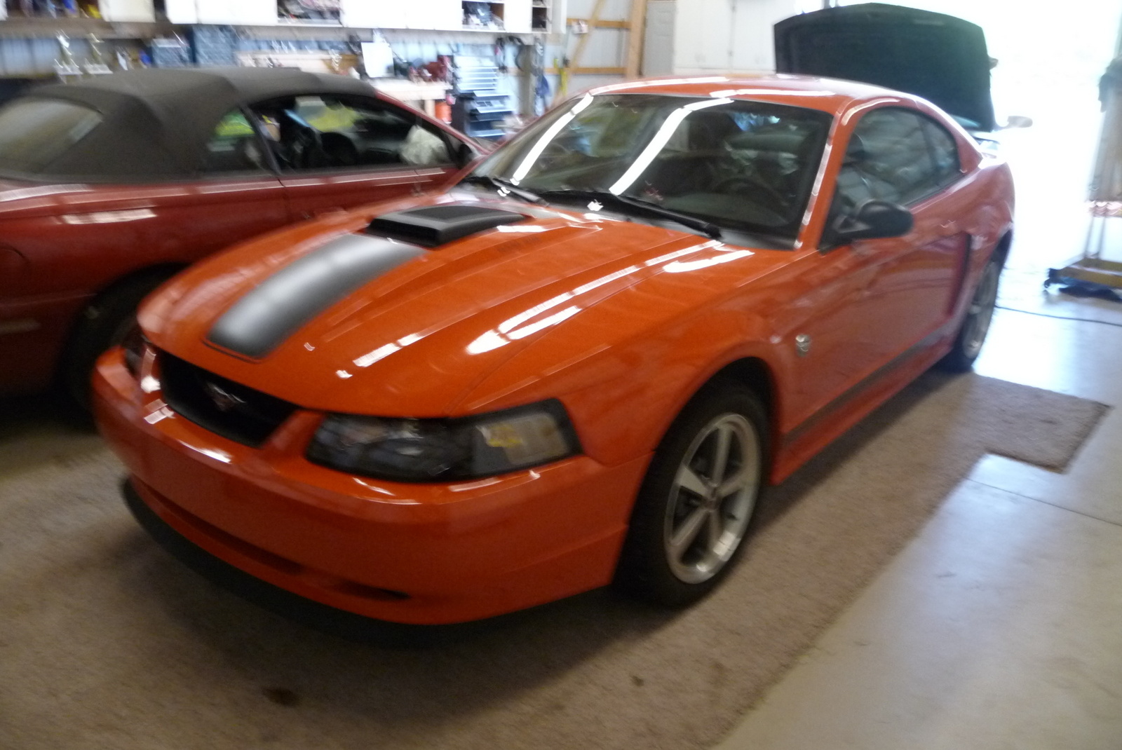 picture of 2004 ford mustang mach 1 exterior. Black Bedroom Furniture Sets. Home Design Ideas