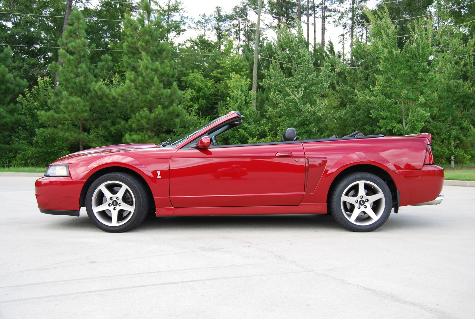 2003 ford mustang svt car autos gallery 2003 ford mustang svt image sciox Images