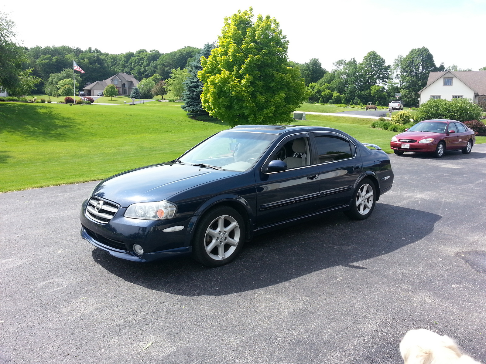 2003 nissan maxima 3 5 se related infomation specifications weili automotive network. Black Bedroom Furniture Sets. Home Design Ideas