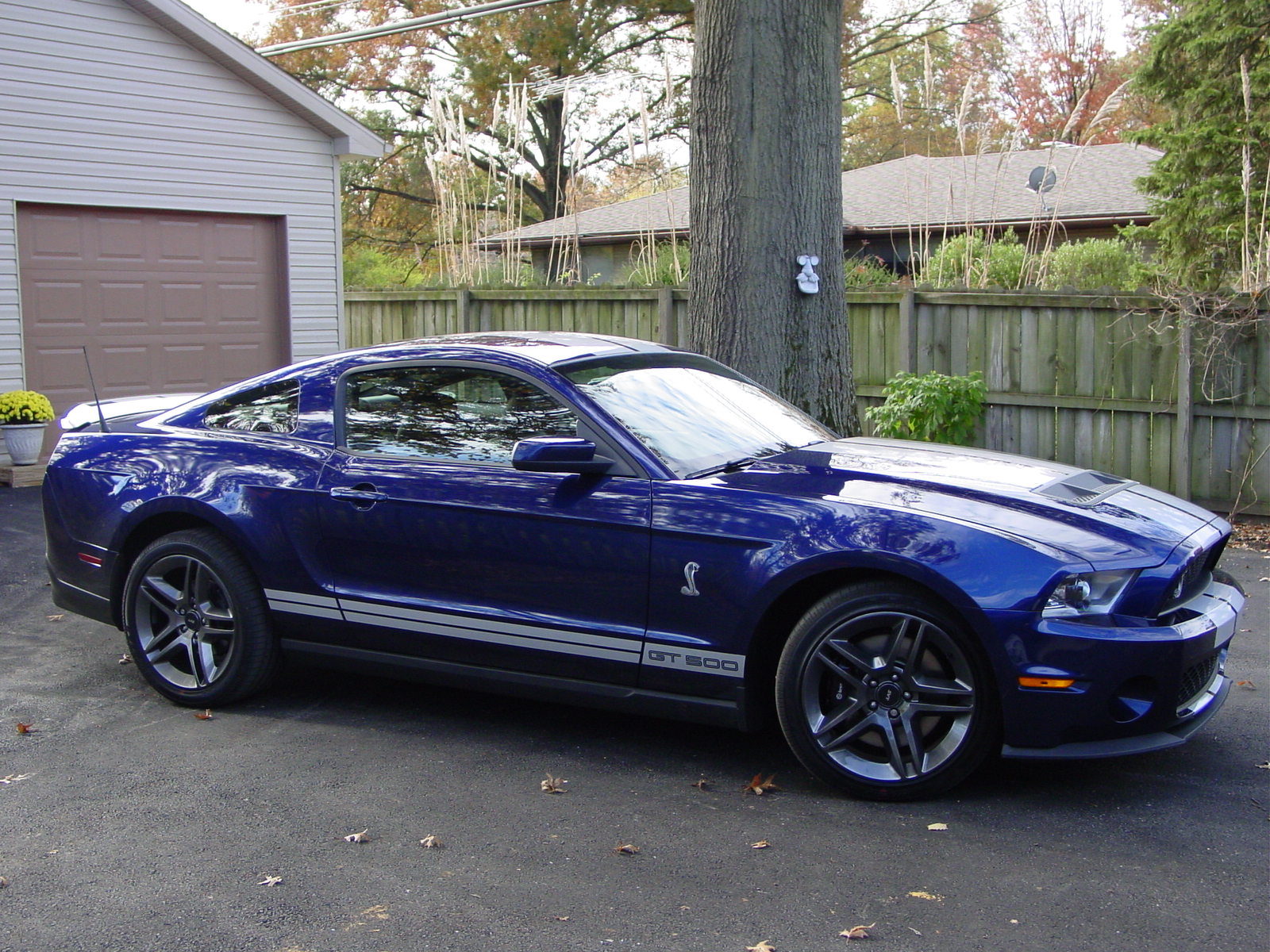 2010 Ford Shelby Gt500 Pictures Cargurus