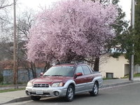 Picture of 2003 Subaru Baja AWD, exterior, gallery_worthy