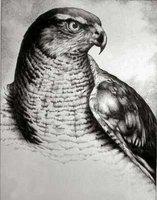 petrohawk