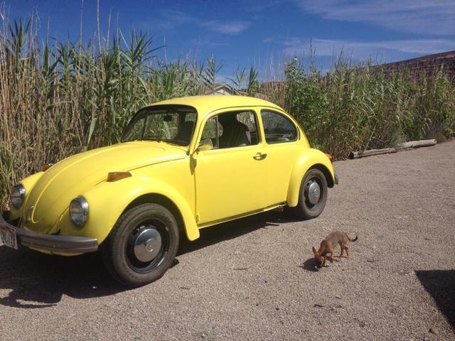 Picture of 1973 Volkswagen Beetle