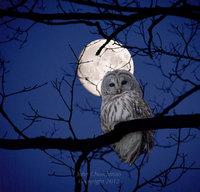 nightowl8267