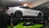 Picture of 2016 Ford Shelby GT350 R