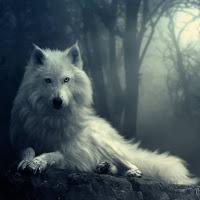 Bigg Badd Wolf