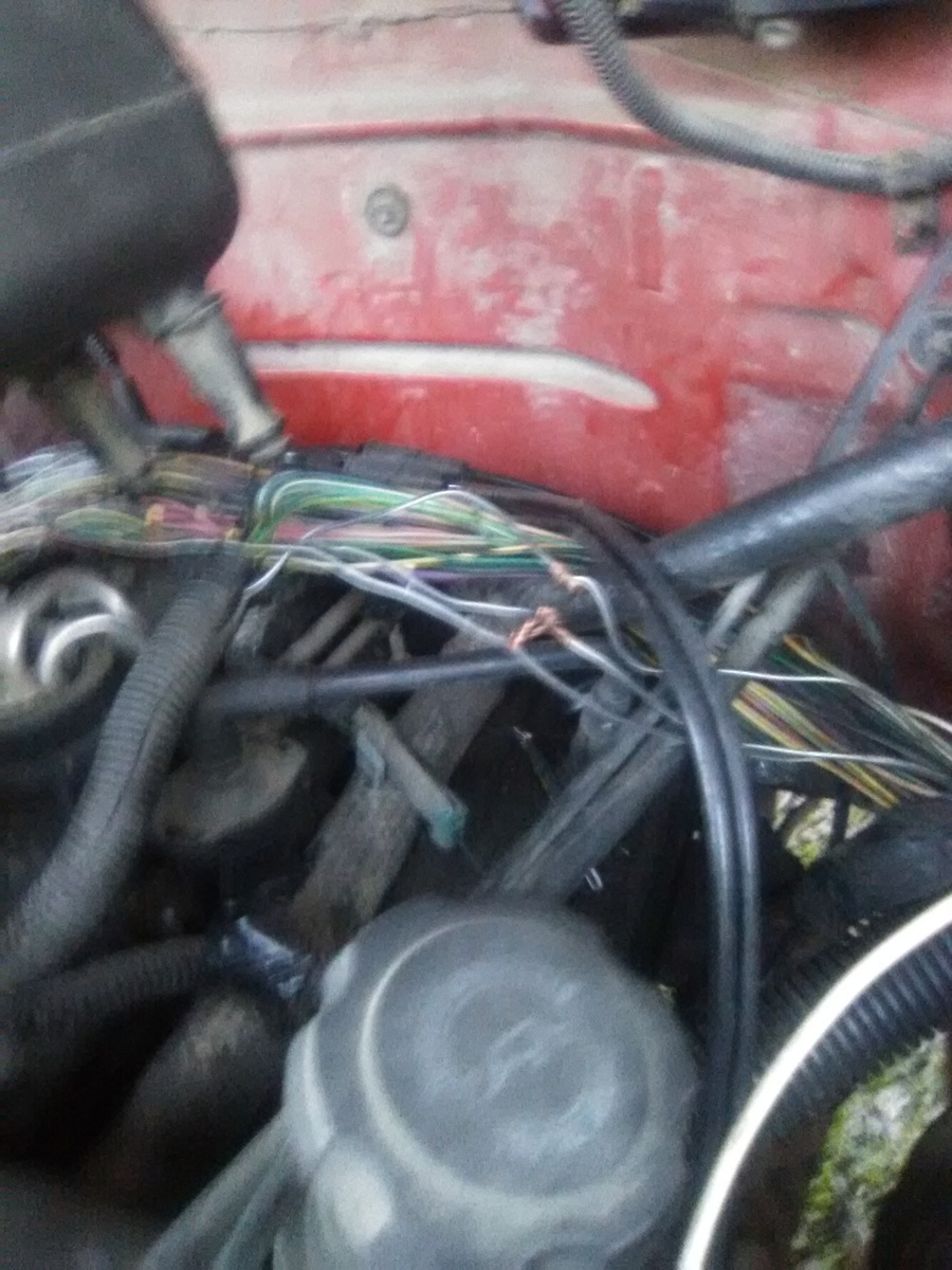 wiring harness don't know what they are for. One gets hot when you try to  start it looks. It goes to he passenger side fender.