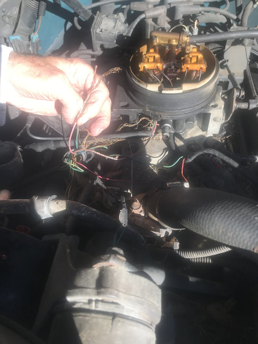 1995 wiring harness - rodent damage