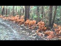 Fiat Panda 4x4 - A drive through the woods